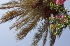 2012-08-02_07-12-08_013.JPG